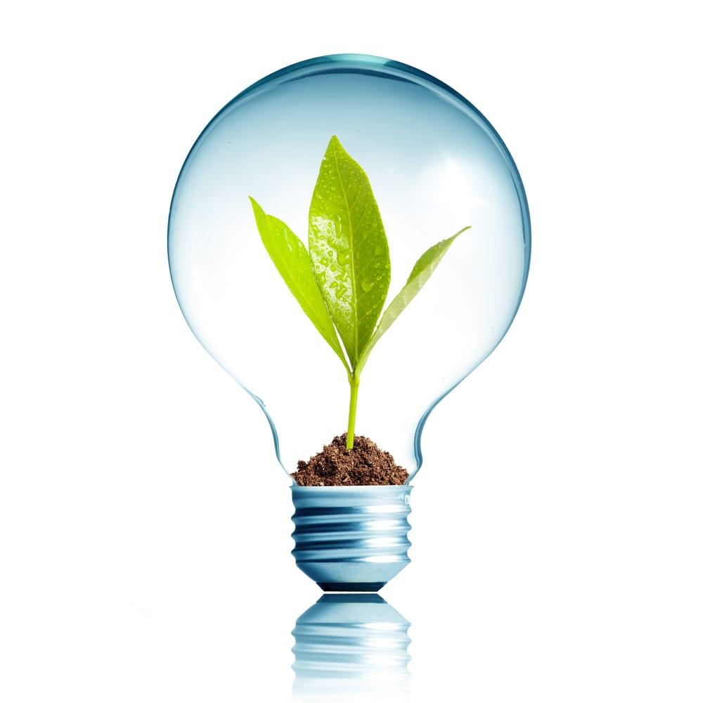 revoluce numero verde